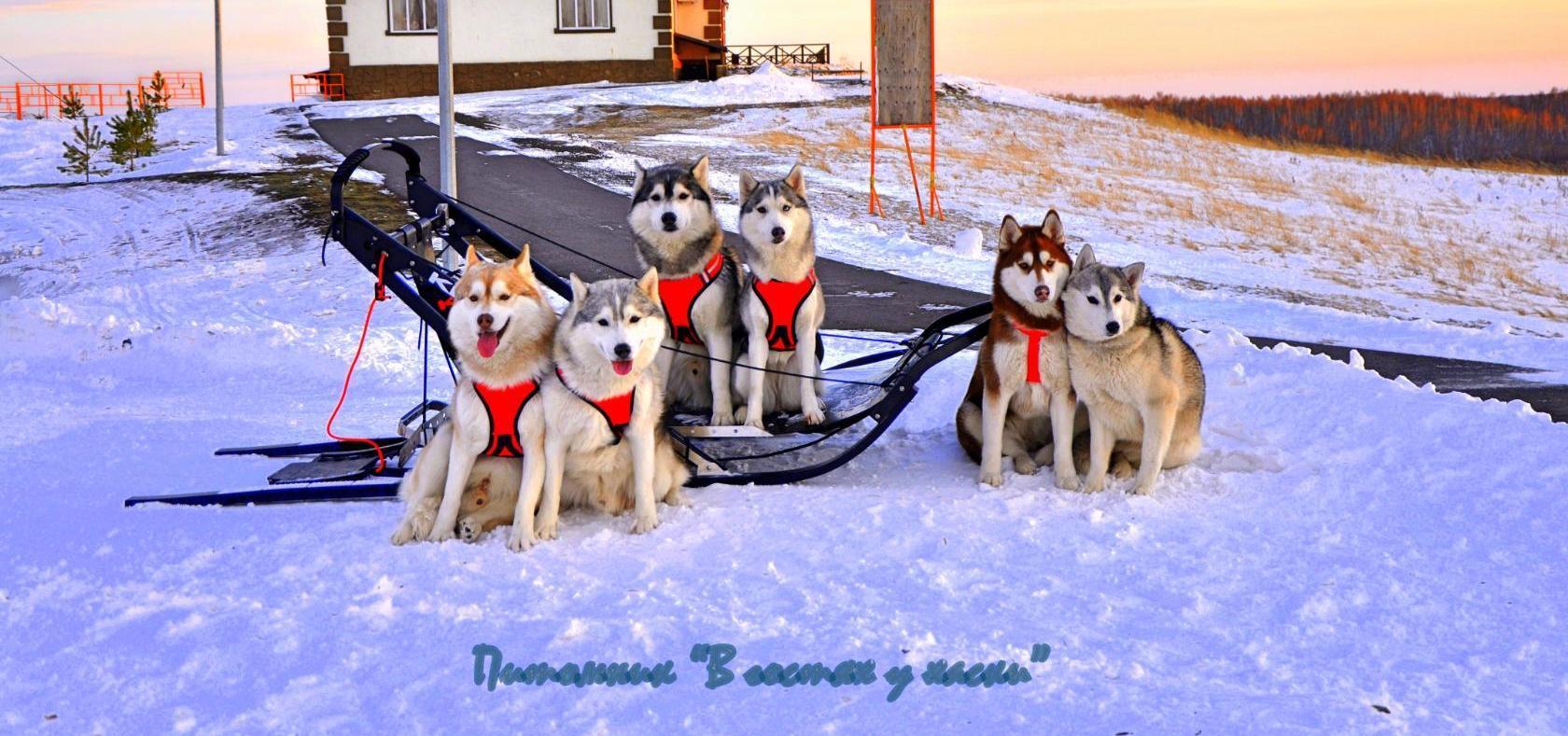 Шлейка Ездовая своими руками Dogs Еxclusive ВКонтакте 55